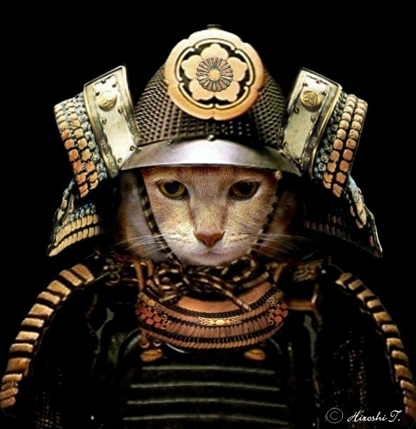 kitty samurai